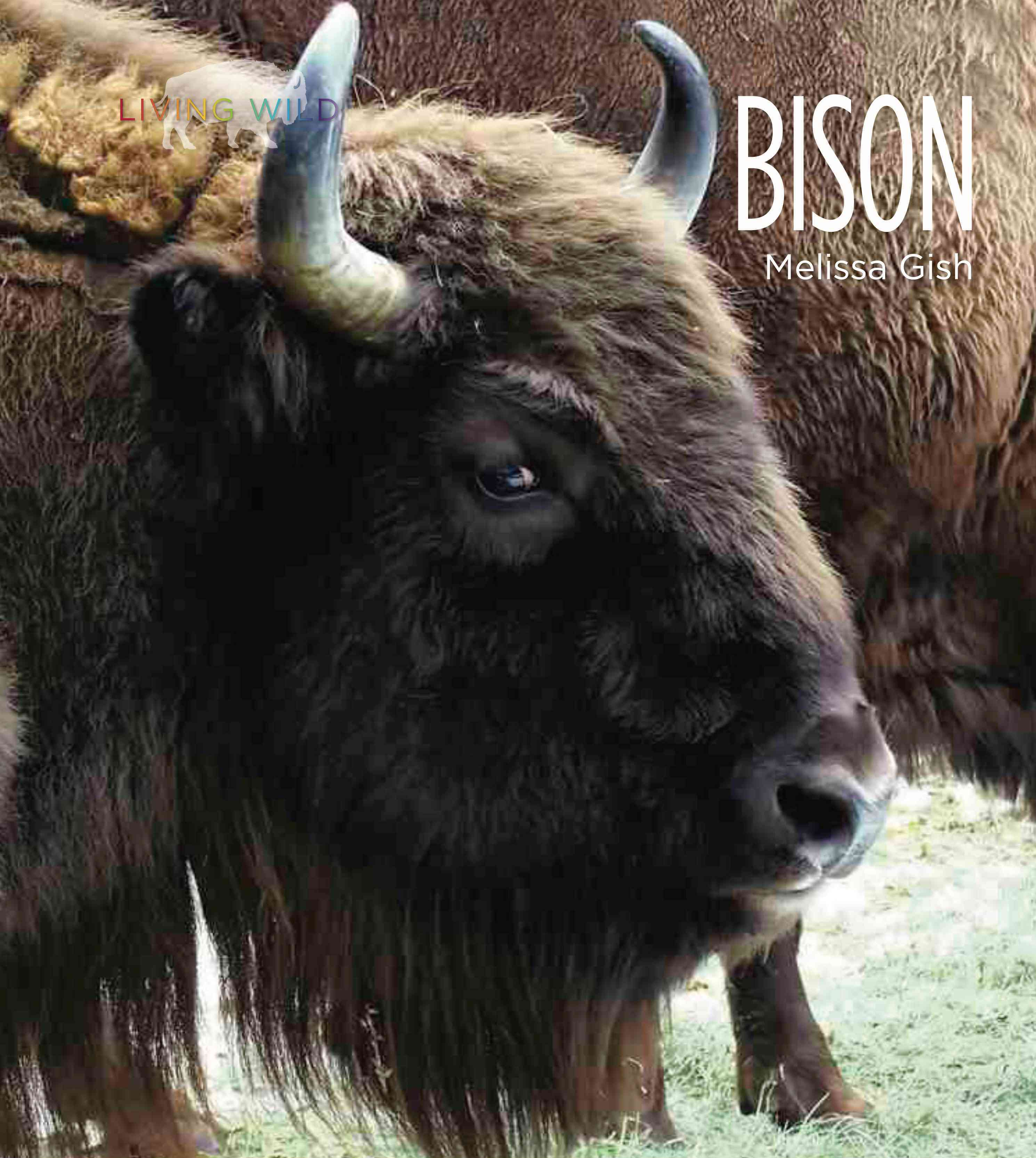 Bison By Gish, Melissa